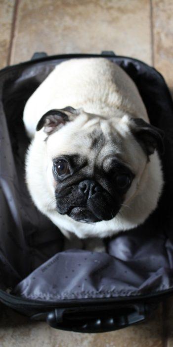Lulu w walizce