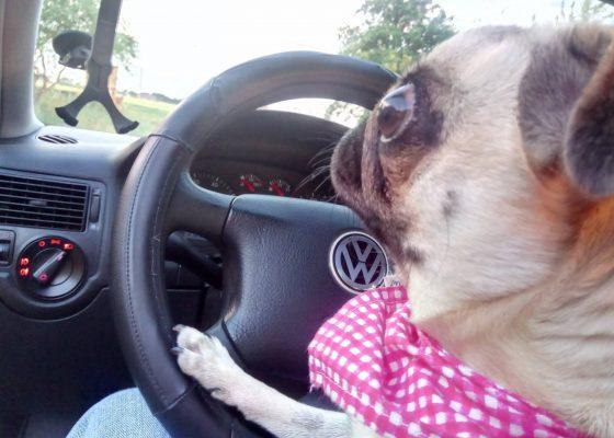 prada-kierowca